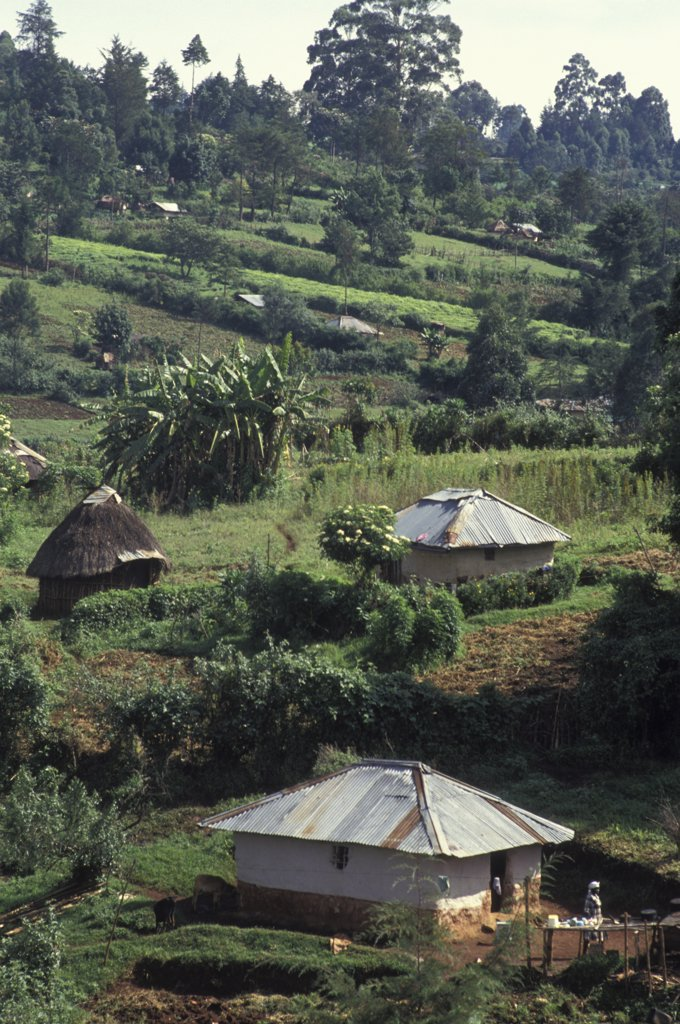 Kenya, Near Eldoret, Shamba Or Farms In The Hills : Stock Photo