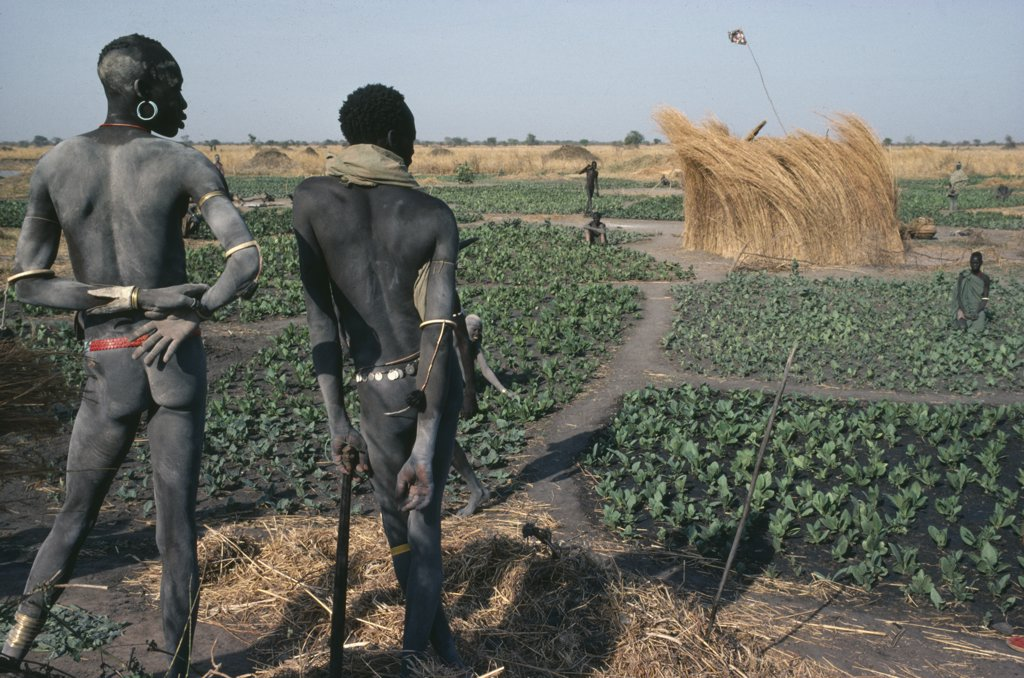 Sudan, Farming, 'Dinka Men Contemplating Field Of Tobacco, The Only Crop Grown During The Dry Season.' : Stock Photo