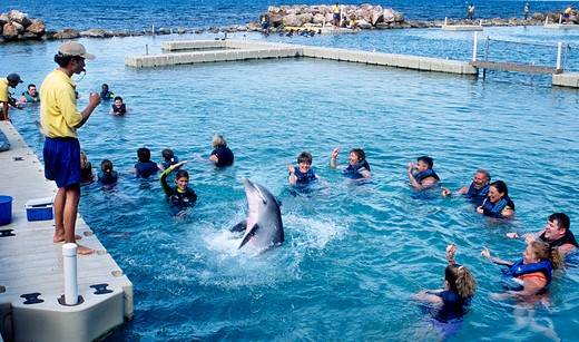 Swimming with Dolphins at Ocho Rios in Jamaica : Stock Photo