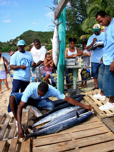 Stock Photo: 1851-6055 The Nevis Fishing Competition in the Caribbean