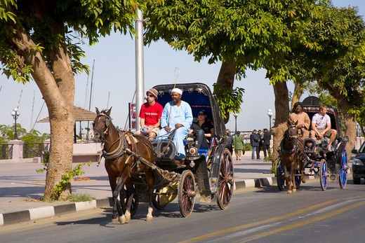 Stock Photo: 1851-6108 Calache horse drawn carriages along the Corniche at Luxor in Egypt