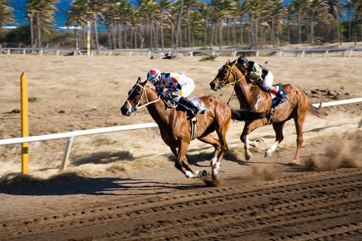 Stock Photo: 1851-6343 Horse Racing at Nevis