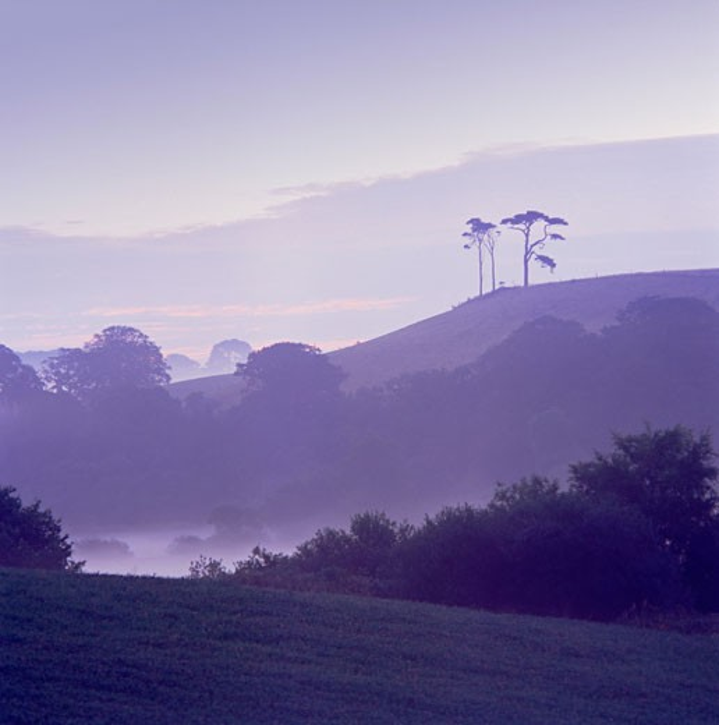 UK - England, Devon, Budleigh Salterton, Misty rural landscape at dawn : Stock Photo