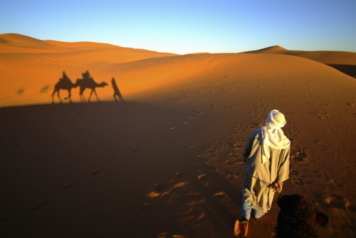 Morocco, , Merzouga, Camel being led in the desert : Stock Photo