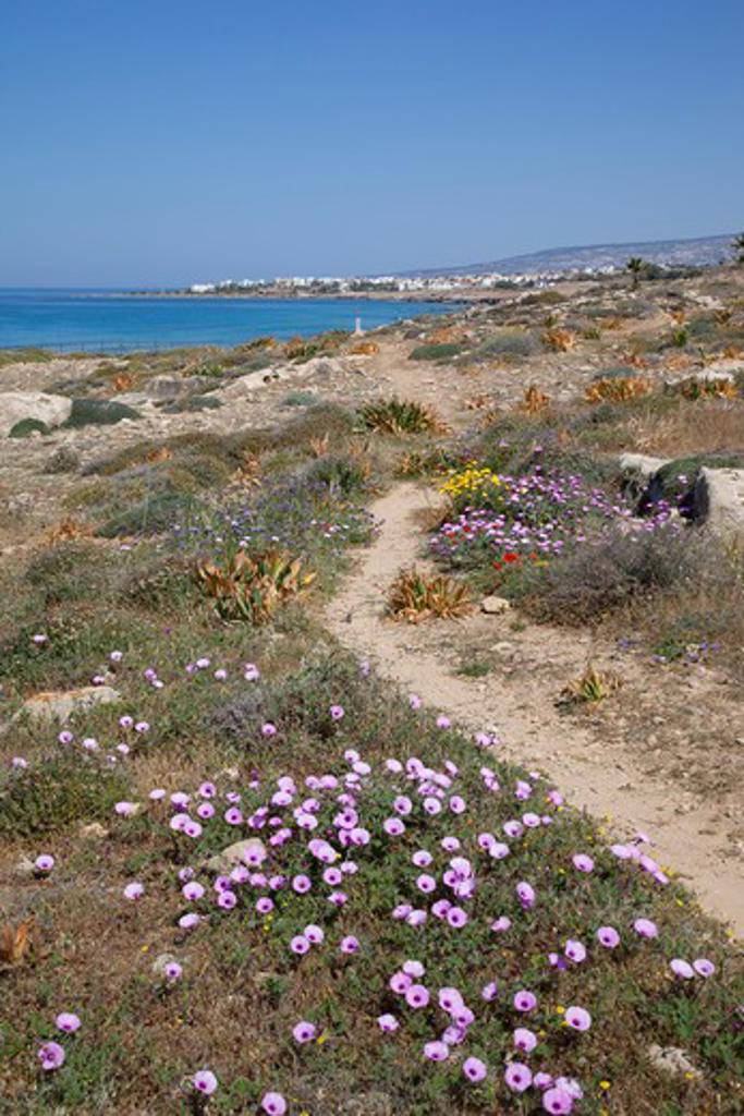 Cyprus, Paphos, Kato Paphos, Tombs of the Kings : Stock Photo