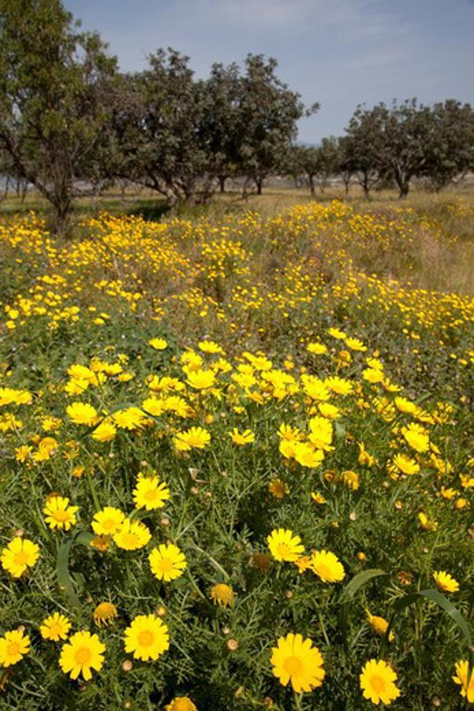 Cyprus, South Cyprus, Paphos, Cyprus; Akamas; Countryside near Akamas; : Stock Photo