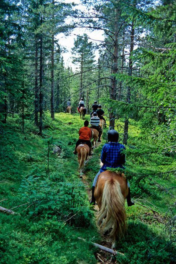 Stock Photo: 1885-22513 Sweden, Central sweden, horse riding in summer forest, central sweden