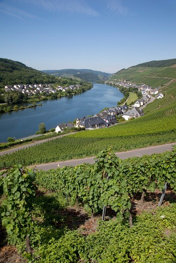 Germany, Rhineland-Palatinate, Koblenz, View of Zell-Merl Village & Church from Vinyard : Stock Photo