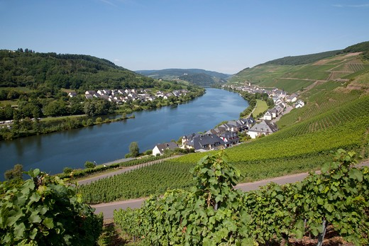Stock Photo: 1885-22782 Germany, Rhineland-Palatinate, Koblenz, View of Zell-Merl Village & Church from Vinyard