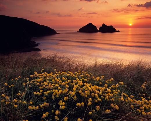 Stock Photo: 1885-24213 UK - England, Cornwall, Holywell Bay, Gull Rocks at sunset