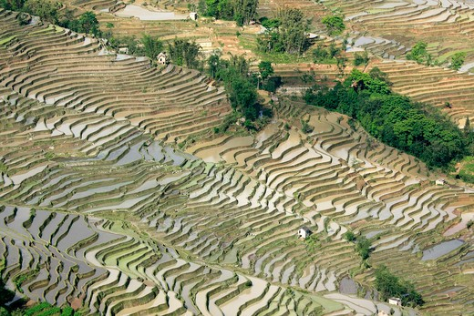 China, Yuanyang, View over rice terraces : Stock Photo