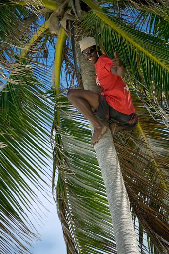 Caribbean, Barbados, Bottom Bay, Man in red giving thumbs up on palm tree : Stock Photo