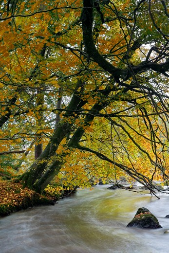 UK - Northern Ireland, County Tyrone, Cookstown - near, View along Ballinderry River in autumn : Stock Photo