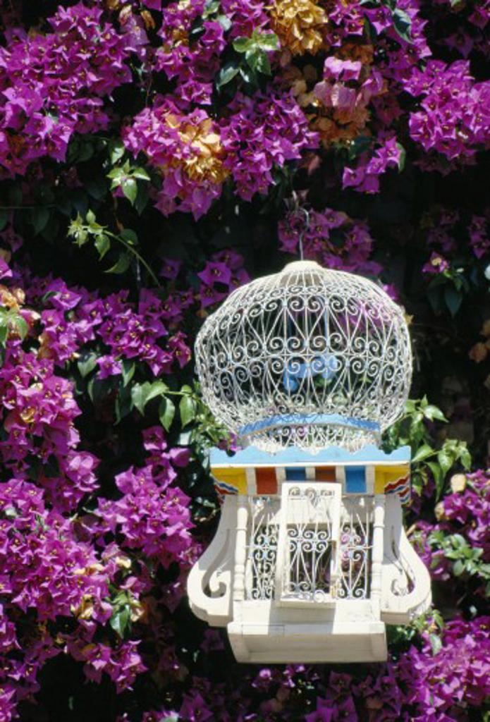 Tunisia, Tunis, Sidi Bou Said, Traditional Bird-cage : Stock Photo