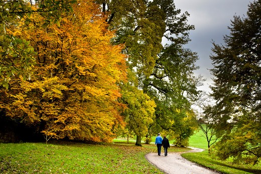UK - England, Yorkshire, General, Couple walking in a park in autumn : Stock Photo
