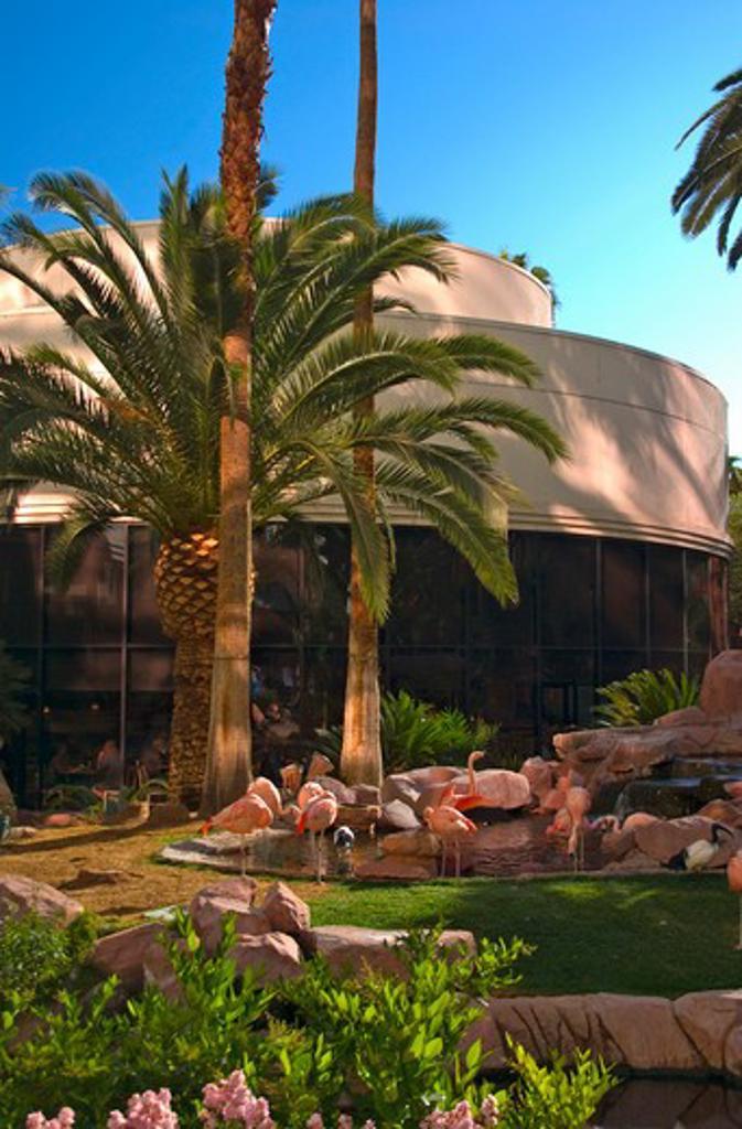 USA, Nevada, Las Vegas, Pink flamingos in the Flamingo Hotel Casino gardens : Stock Photo