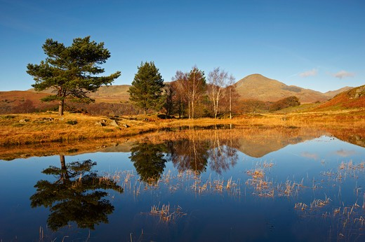 Stock Photo: 1885-27908 UK - England, Cumbria, Lake District National Park, Kelly Hall Tarn with reflections in autumn