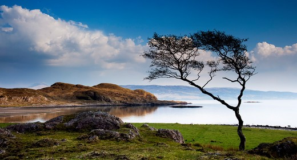 Stock Photo: 1885-28411 UK - Scotland, Highland, Ardgour, Lone tree beside Loch Linnhe