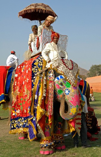 India, Rajasthan, Jaipur, Colourful elephant with riders at the Jaipur Elephant Festival : Stock Photo