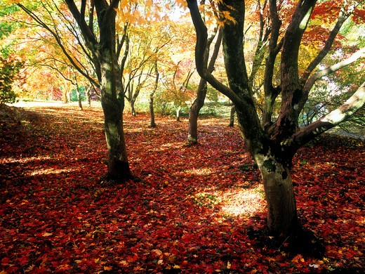 Natural World, Trees, Woodland in autumn : Stock Photo