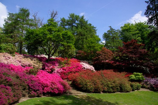UK - England, Surrey, Virginia Water, Valley Gardens in spring : Stock Photo
