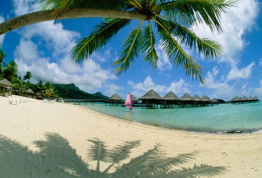 Stock Photo: 1885-3800 Society Islands, Bora Bora, Moana Beach Hotel, Palm shading the beach