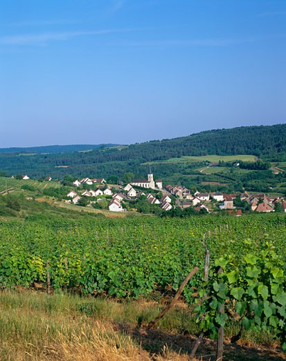 Stock Photo: 1885-5987 France, Burgundy , Arcenant, View of Village across Vineyard