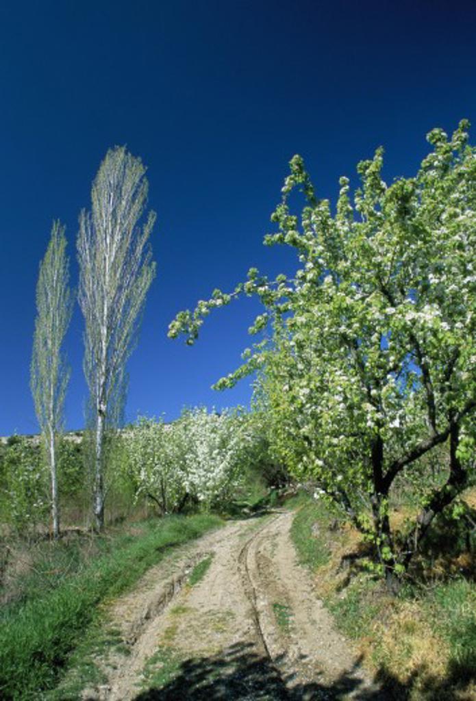 Cyprus, South , Diarizos Valley (Nr. Mandria), Orchard : Stock Photo