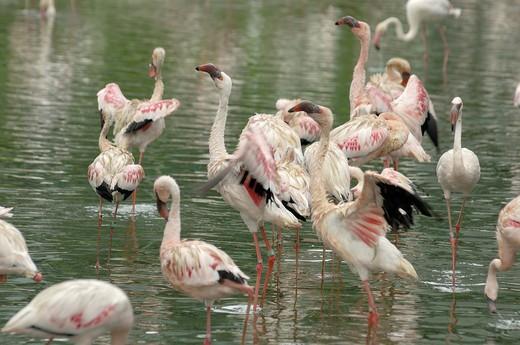 Stock Photo: 1886-47182 Flamingo bird in Jurong bird park at Singapore  ; South East Asia