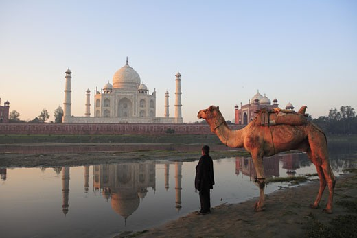 Young boy carrying camel at Taj Mahal Seventh Wonders of World on the south bank of Yamuna river ; Agra ; Uttar Pradesh ; India UNESCO World Heritage Site : Stock Photo