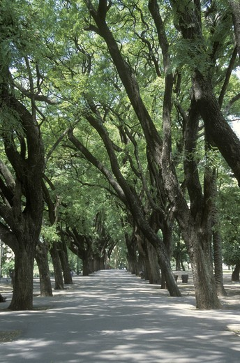 TREE LINED LANE in LEZAMA PARK in barrio SAN TELMO - BUENOS AIRES, ARGENTINA : Stock Photo