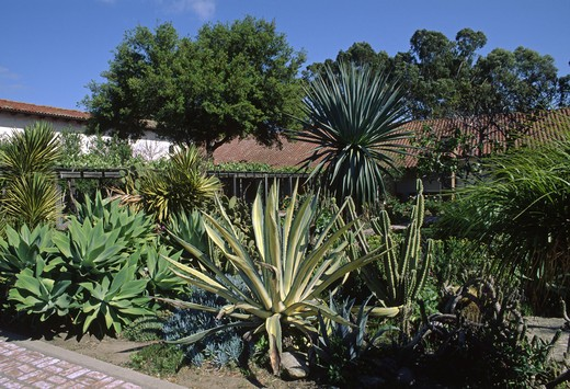 Stock Photo: 1886-50701 SUCCULENT & CACTUS garden of MISSION SAN LUIS OBISPO
