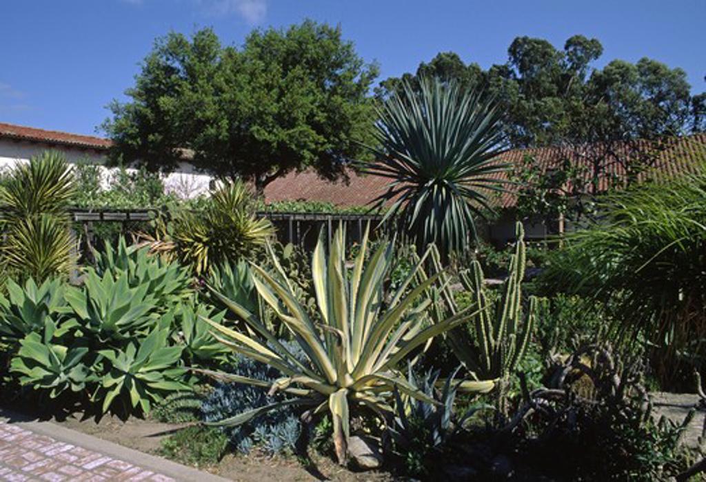 SUCCULENT & CACTUS garden of MISSION SAN LUIS OBISPO : Stock Photo