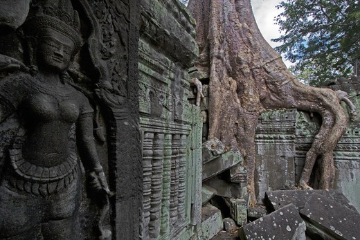 A silk cotton or kapok tree (Ceiba Pentandra) and a bas relief stone Apsara (celestial maiden) at Ta Prohm, built by Jayavarman VII at Angkor Wat - Siem Reap, Cambodia : Stock Photo