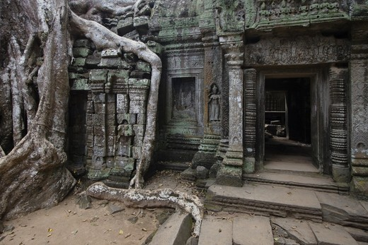 Silk cotton or kapok tree roots (Ceiba Pentandra) invade the Khmer ruins of Ta Prohm, built by Jayavarman VII, part of Angkor Wat - Siem Reap, Cambodia : Stock Photo