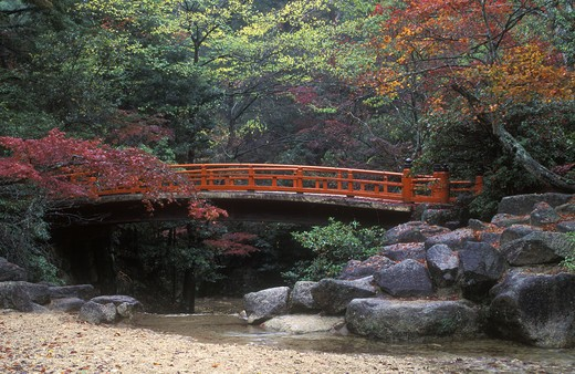 JAPANESE RED MAPLE & Straditional FOOT BRIDGE in MOMIJIDANI PARK - MIYA JIMA ISLAND, JAPAN : Stock Photo