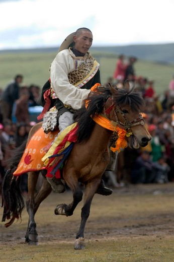 A Khampa participates in the dressage competition at the Litang Horse Festival in Kham - Sichuan Province, China, (Tibet) : Stock Photo
