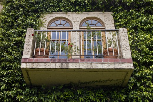 Stock Photo: 1886-53785 BALCONY surrounded by an IVY WALL at the BLACKSTONE WINERY near GONZALES in the Salinas Valley of CALIFORNIA