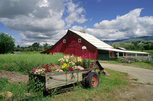 RED BARN and FLOWERS -  OREGON FARM : Stock Photo
