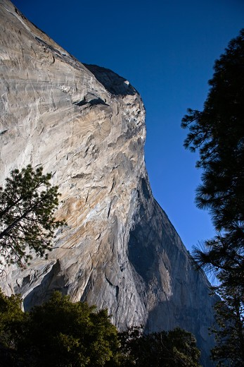 Stock Photo: 1886-56813 EVERGREEN TREES below EL CAPITAN in the YOSEMITE VALLEY - YOSEMITE NATIONAL PARK, CALIFORNIA