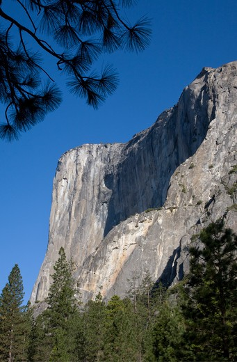 Stock Photo: 1886-56860 EVERGREEN TREES below EL CAPITAN in the YOSEMITE VALLEY - YOSEMITE NATIONAL PARK, CALIFORNIA