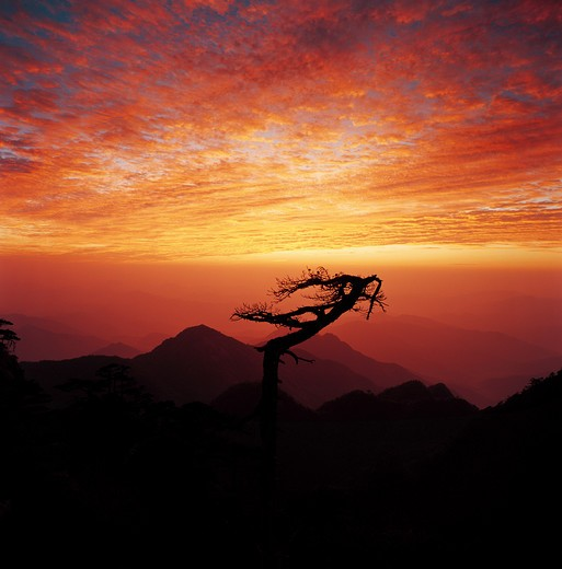 Stock Photo: 1886-61341 silhouette of tree on the top of mountain under afterglow,Sanqing Mountain,Jiangxi,China