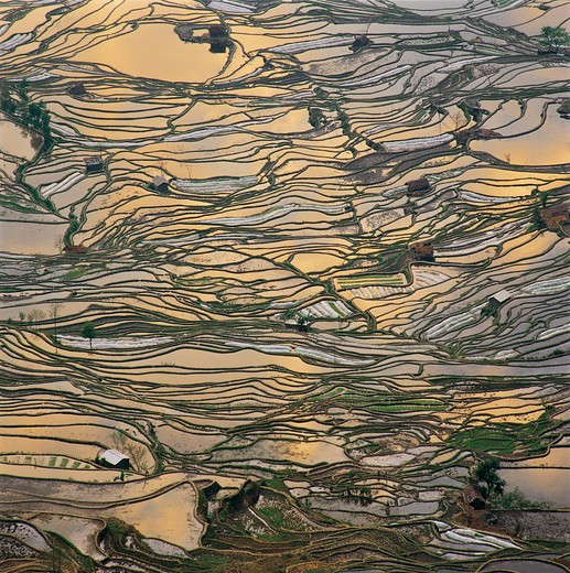 Stock Photo: 1886-61708 terrace at Yuanyang,Yunnan,China