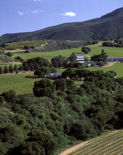 Stock Photo: 1886-7552 SMITH & HOOK/HAHN ESTATES VINEYARD & WINERY are located in the Santa Lucia Mnts. - CALIFORNIA