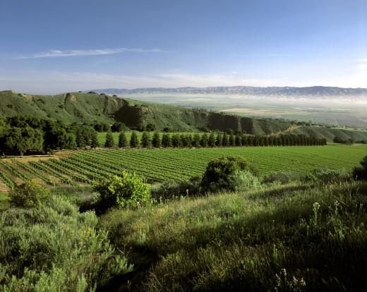 SMITH & HOOK/HAHN ESTATES Vineyard has a spectacular view across the SALINAS VALLEY to the GABILAN MNTS. - CALIF.  : Stock Photo