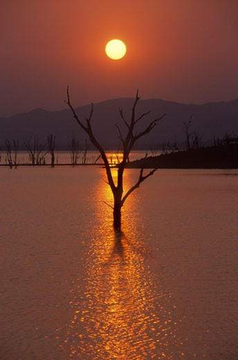 Sunset at LAKE KARIBA silhouettes trees which were flooded over 40 years ago - ZIMBABWE : Stock Photo