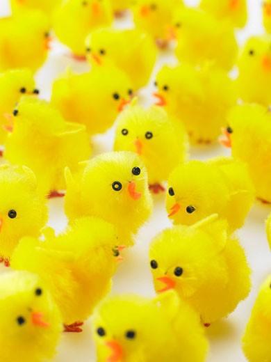 Abundance Of Easter Chicks : Stock Photo