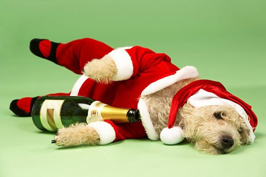 Samll Dog In Santa Costume Lying Down With Champagne Bottle : Stock Photo