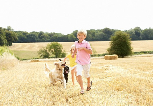 Boy With Dogs Running Through Summer Harvested Field : Stock Photo