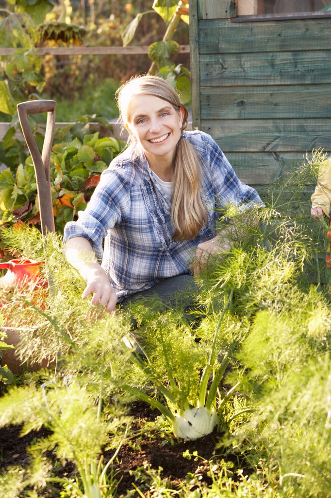 Woman working on allotment : Stock Photo